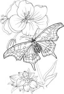 Butterfly Coloring Pages 24  Purple Kitty sketch template