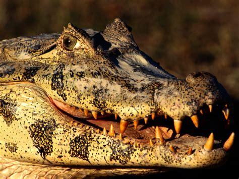 best latin boat names top 10 deadliest creatures of the