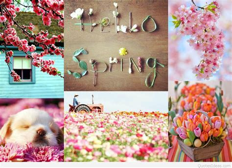 spring pictures   wallpapers