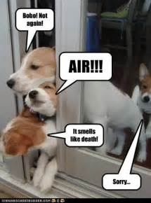 dogs escaping from toxic fart funny dog photo with captions trendvee