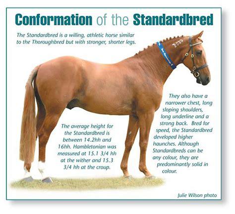 standardbred tattoo numbers standardbred association queensland horse adoption program