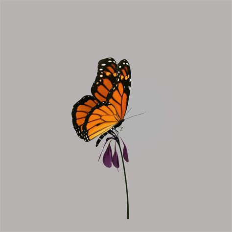 Monarch Butterfly Flower Animation 3d Obj Butterfly 3d Animation