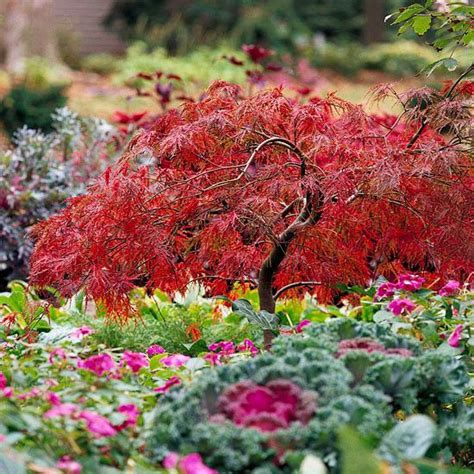 maple tree growing conditions gardens beautiful and grace o malley on