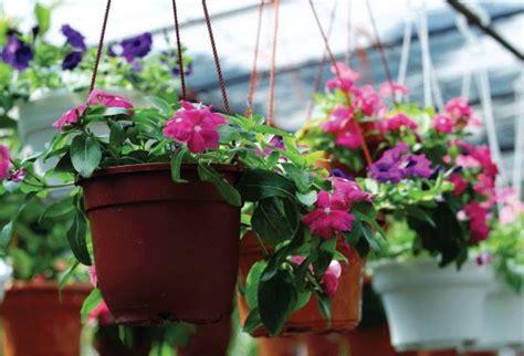 Pot Anggrek Gantung tanaman pot gantung untuk halaman rumah minimalis supaya