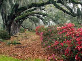 Charleston Row Houses - keindahan alam the most beautiful pictures of nature