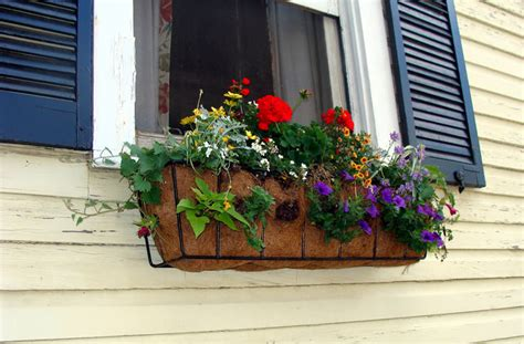window box planting ideas diy how to plant a personal garden in a small space