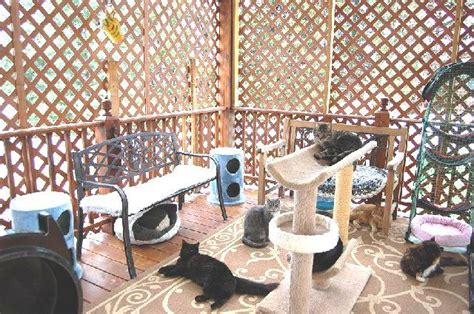 Cat Room Ideas by 71 Best Cat Room Ideas Images On Pets Cat