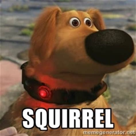 Squirrel Meme - is your dog like the one from the movie up squirrel