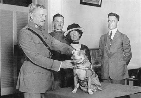 How Sergeant Stubby Died Stubby Hoya Mascot And War National Museum Of American History