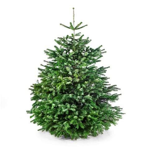weihnachtsbaum 170 cm der gro 223 e karl meine tanne