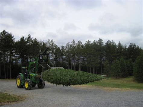 cut your own trees montgomey county maryland howard county s tree farms elkridge md patch