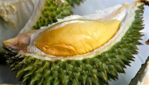balailamo  jenis durian  indonesia
