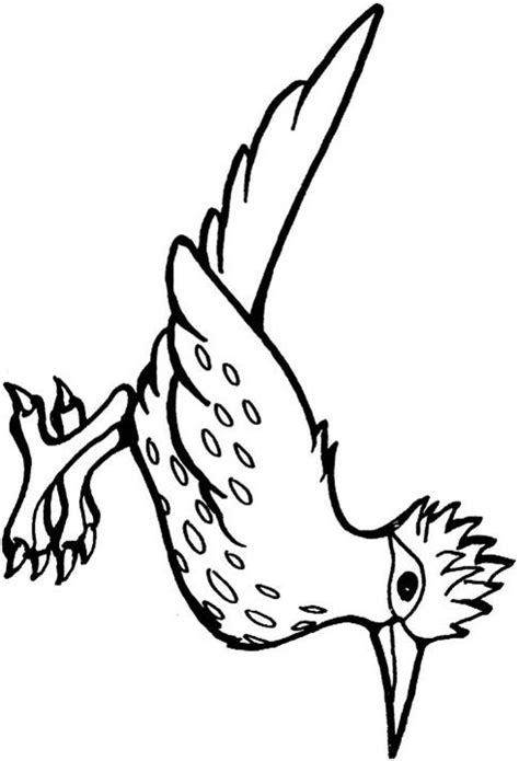 roadrunner bird coloring page free coloring pages of roadrunner bird