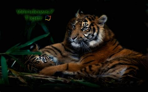 Tiger Themes For Windows 7 Free Download | tiger themes for windows 7 free download idlimi