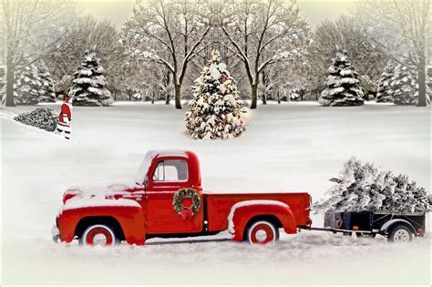 alan anderson christmas trees trees photograph by