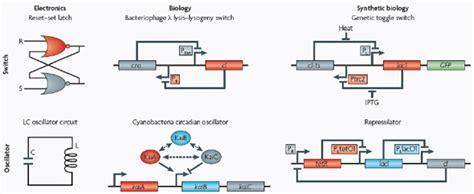 synthetic circuits integrating logic and memory in living cells synthetic circuits integrating logic and memory in living cells 28 images synthetic analog