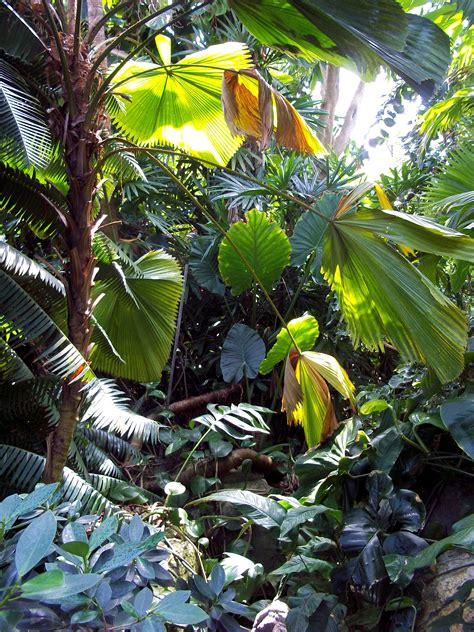 File Al Tropical Cuties | file al tropical cuties vegetaci 243 n tropical lydiayelmundo