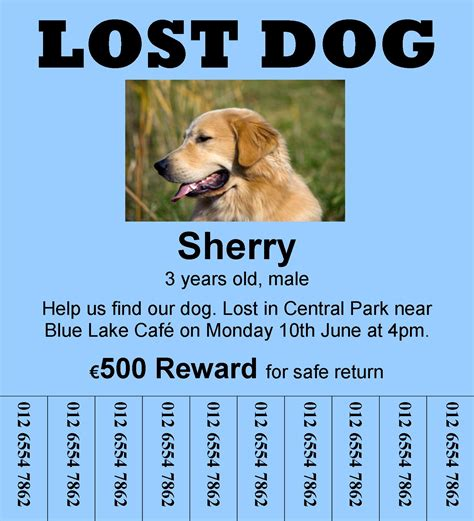 missing why dogs go missing and how to find them books missing flyer template ms word for sale