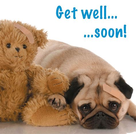 Free Pug Card Template by Get Well Soon Blank Card Pug Puppy Teddy