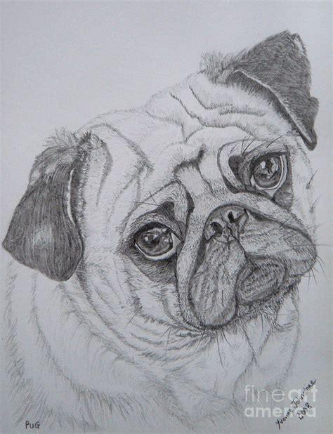 pug drawings pug by yvonne johnstone