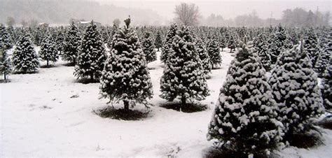 point pleasant christmas tree farm 9 ways to shopsmall this saturday and all season