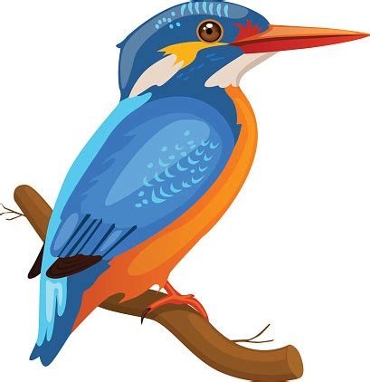 Kingfisher clipart   Clipground