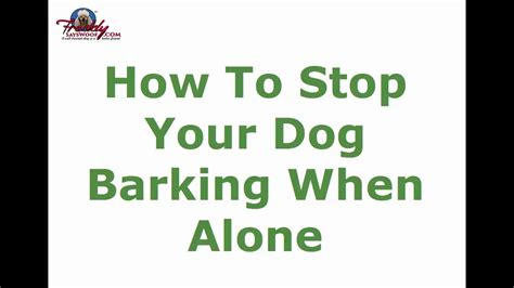 dog barks when i leave how to stop your dog barking when how to stop your dog barking when alone top tips youtube