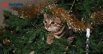 cats and christmas trees how to prevent a holiday
