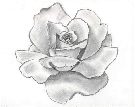 rose flower drawing wallpapers beautiful flowers wallpapers
