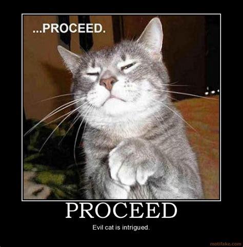 Evil Cat Meme - 1000 images about evil cats on pinterest cats aliens