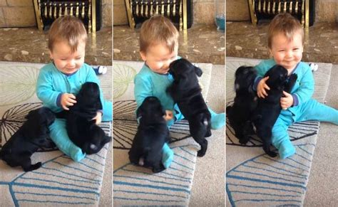 how between puppies viral now this cuddle between baby and puppies is