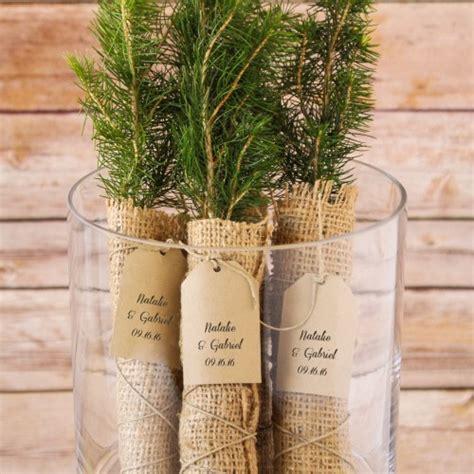 Wedding Favors Trees personalized tree seedling favor evergreen tree seedling