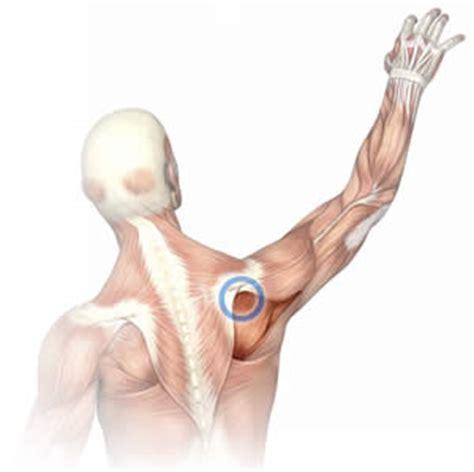elbow tendonitis bench press elbow tendonitis bench press 100 golfers elbow bench