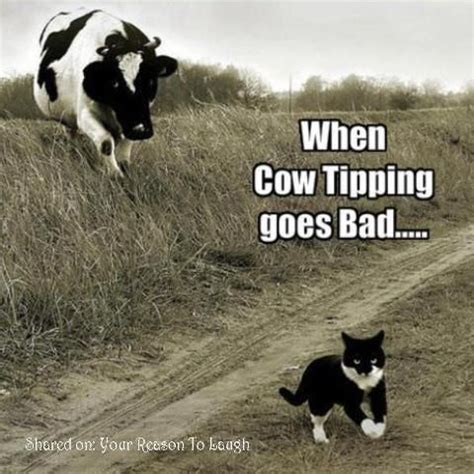 Funny Cow Memes - funny pictures funny jokes and so much more jokideo