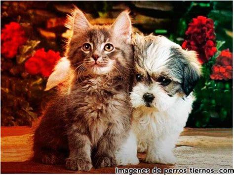 imagenes de animales lindos y tiernos fotos lindas de perros imagenes de perros tiernos