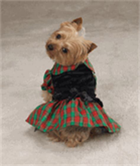 yorkie puppy clothes kooldawgtees clothing store clothes kooldawgtees
