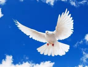 67 not out the white dove as a messenger of the dead