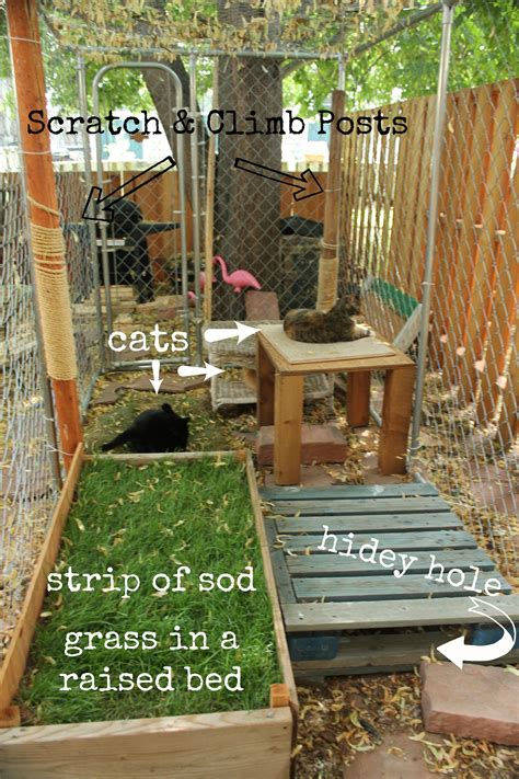 free diy catio plans catio catty shack designs