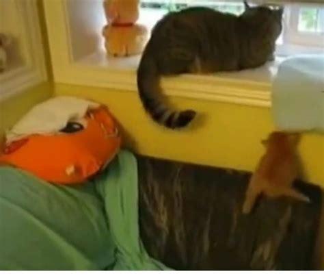 gatitos traviesos gatos traviesos mascotas