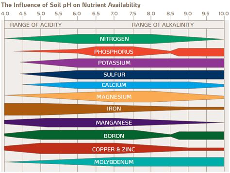 How to test your garden soil's pH, and fix it for great