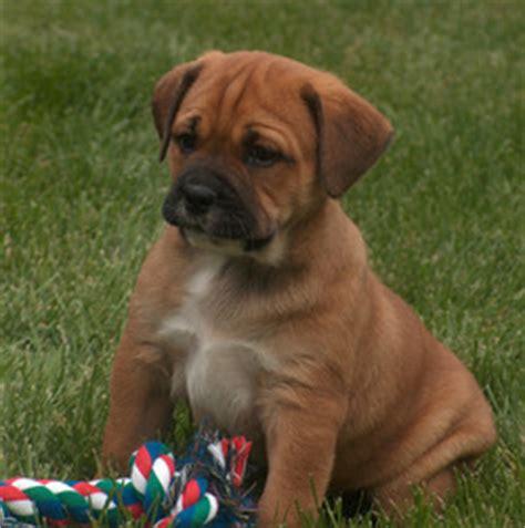 puppies in nebraska breeders in nebraska
