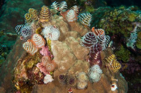 flower gardens national marine sanctuary worms of flower garden banks national marine sanctuary