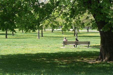 park bench toronto boldts net toronto trinity bellwoods park