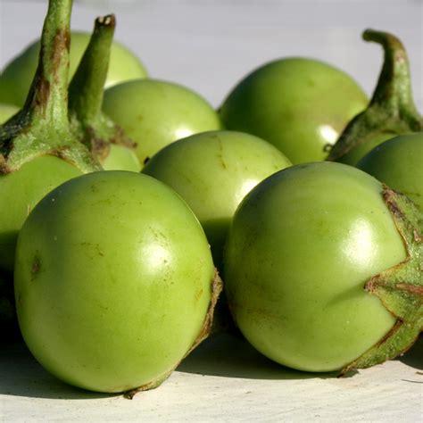 Maroko Serut Apple Brand Ori deaflora aubergine applegreen