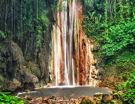 St Lucia Botanical Gardens by 14 Top Tourist Attractions In St Lucia Planetware