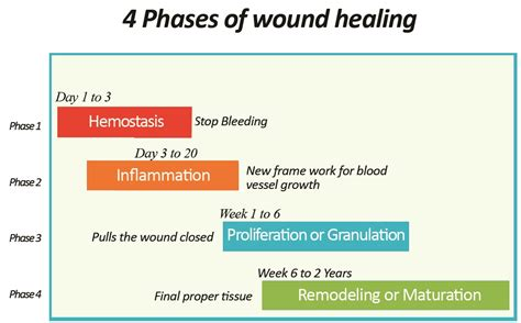 to heal a wounded the transformative power of buddhism and psychotherapy in books what is the process of wound healing health benefits