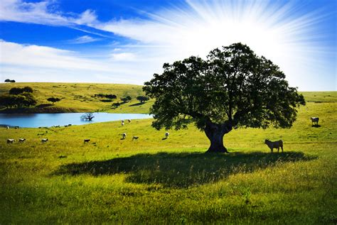 imagenes bonitas de un paisaje paisaje