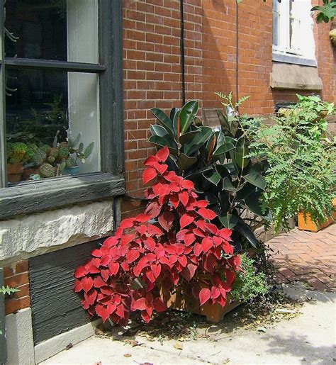sidewalk planters s photo album