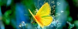 couverture papillons exotiques photo et image