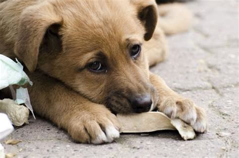 stray dogs steve barclay